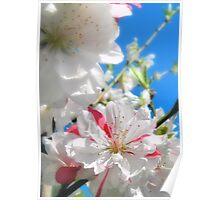 Peppermint Peach Bloom Poster