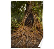 Large hollow tree in the rainforest Poster
