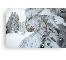Frosty snow covers trees Metal Print