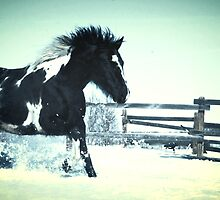 Wild horse in snow by Johnathan Perreal