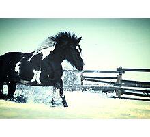 Wild horse in snow Photographic Print