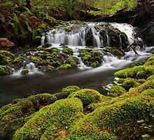 Delightful Dove River by Donovan Wilson