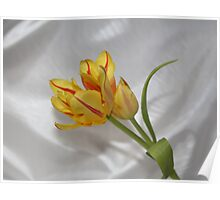 Two Tulips One Stem Poster