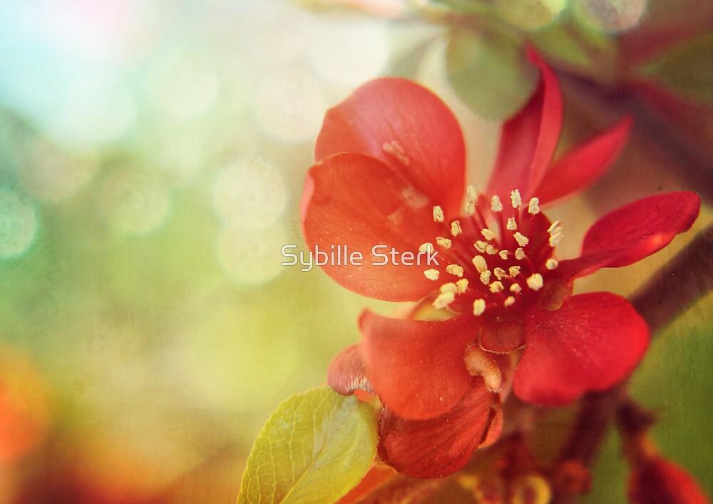 Love Me in Spring by Sybille Sterk