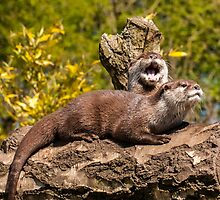 Asian short-clawed otters by Moonlake