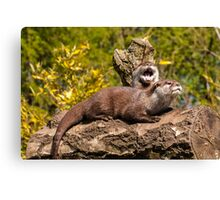 Asian short-clawed otters Canvas Print