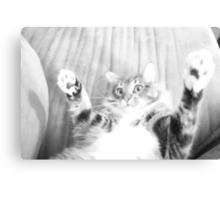 Kitten playing Canvas Print
