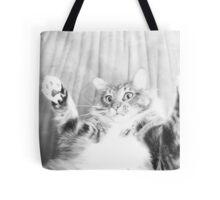 Kitten playing Tote Bag