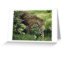 Spots Greeting Card