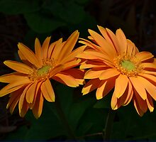 Mornings First Light by Kathy Baccari