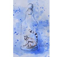 Bottled Lemur Photographic Print