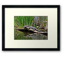 Lazy Gator Reflection Framed Print