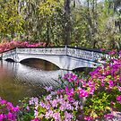 The Bridge At Magnolia Plantation by Kathy Baccari