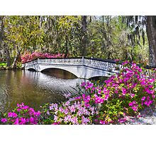 The Bridge At Magnolia Plantation Photographic Print