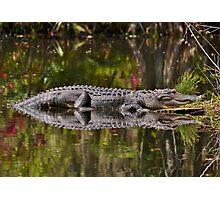 Big Gator Reflection Photographic Print
