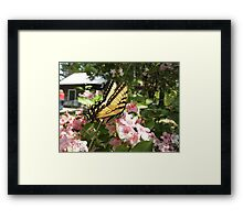 Tiger Swallow on some pretty flowers Framed Print