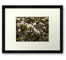Flourish Framed Print