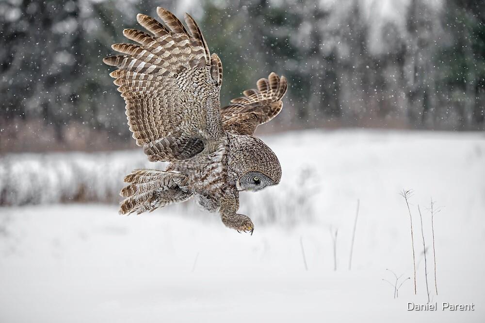Homing in on prey... by Daniel  Parent
