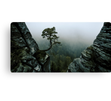 tree surrounded with rocks Canvas Print