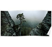 tree surrounded with rocks Poster