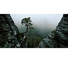 tree surrounded with rocks Photographic Print