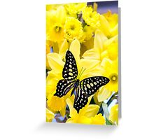 Butterfly and Daffodils Greeting Card