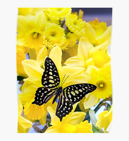 Butterfly and Daffodils Poster