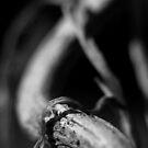 Ants eye view - tunnel vision by Zen-Art (Zenith)