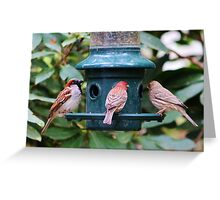Three Bird Friends Greeting Card