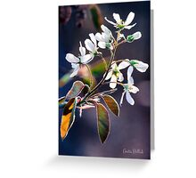 Glorious Shad Blossoms Greeting Card