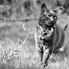 Cat on the Prowl by Paul Dulac
