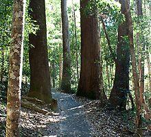 To walk among giants by Linda Lees