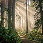 A Walk in the Woods by Zero Dean