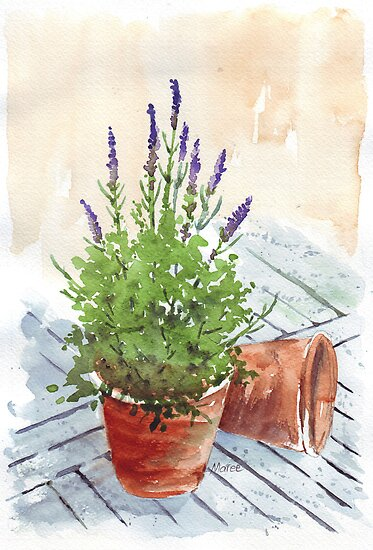 Lavender in a pot by Maree  Clarkson