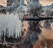Reeds in Westfield Heron Reserve by BigAndRed