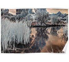 Reeds in Westfield Heron Reserve Poster