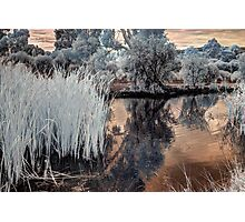 Reeds in Westfield Heron Reserve Photographic Print