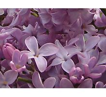 Lilacs Photographic Print