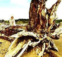 La Push roots by Sarah Ella Jonason
