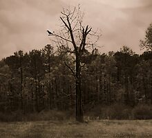 Night Watch by Scott Mitchell