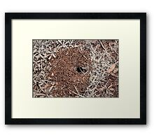 insect hole Framed Print