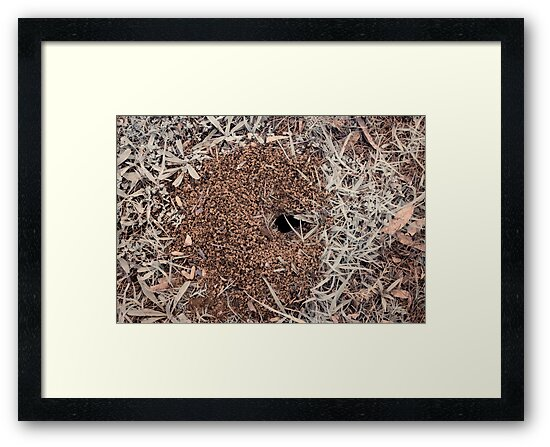 insect hole by BigAndRed