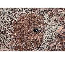 insect hole Photographic Print