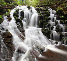 Olivia Creek Cascade  by Donovan wilson