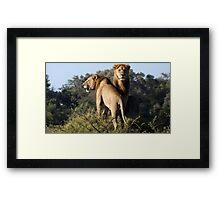 Pose Perfect #2 Framed Print
