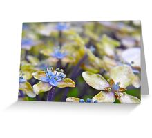 Autumn Hydrangea Greeting Card