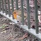 Robin by Eleanor11