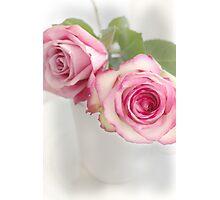 Pink Petals Photographic Print