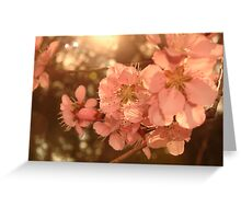 Blossoms2 Greeting Card