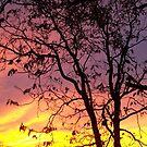 Kansas Sunset by erinv2000
